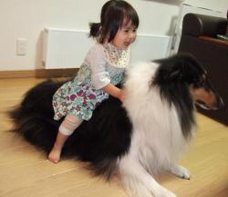 犬のしつけ方教室はDOG LIFE PLUS!広島市や東広島で実施しています。