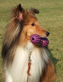 広島での犬のしつけやトレーニングについてはDOG LIFE PLUSへご相談を!