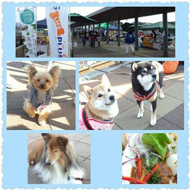 犬とオーナーのためのお店「DOG LIFE PLUS」、ネットショップを飛び出して各イベント会場にてお待ちいたしております。