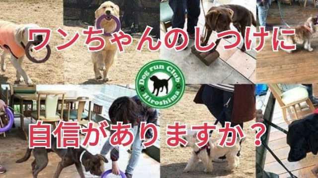 イベント「ドッグランクラブ広島 プラー練習会&しつけ教室」のカバー写真