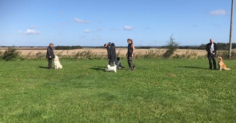 上野貴子 デンマークの犬事情 ~2019年RPTM訪問リポート~後編 - リザスト