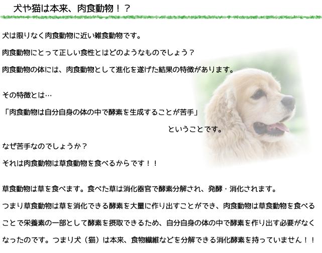 犬のプレミアムフードの通販DOG LIFE PLUS が販売する、犬の生肉についての説明です